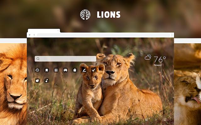 Lions - Wild Cat HD Wallpapers New Tab