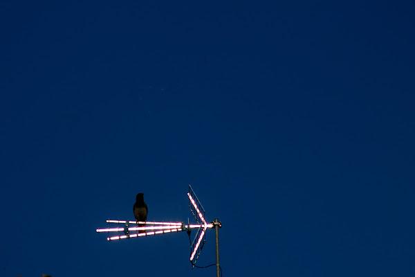 Sitting on shining arrow di CarloPhoto