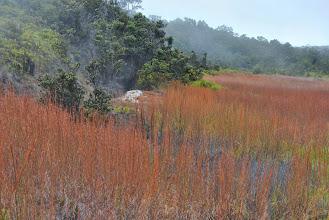 Photo: vapori sulfurei nella foresta