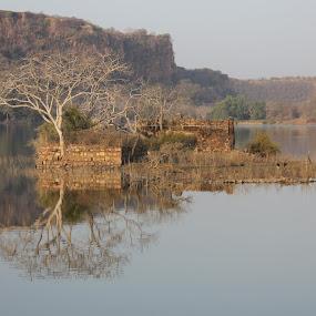 by Yash Savla - Landscapes Forests