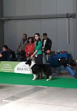 Photo: CACIB show Prague - Exc.1, CAC