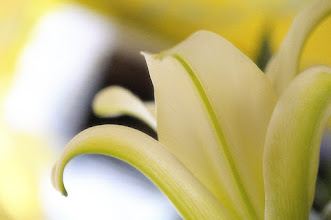 Photo: +Lily Monday #flowers  #flowerphotography