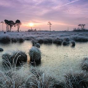 kalmthoutse heide by Twan Konings - Landscapes Sunsets & Sunrises ( water, heide, grass, kalmthout, lake, belgium, winter, rijp, red, nature, ice, trees, night, pink, sunrise )