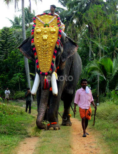 The Majestic Elephant With All Its Decorations Heads Towards The