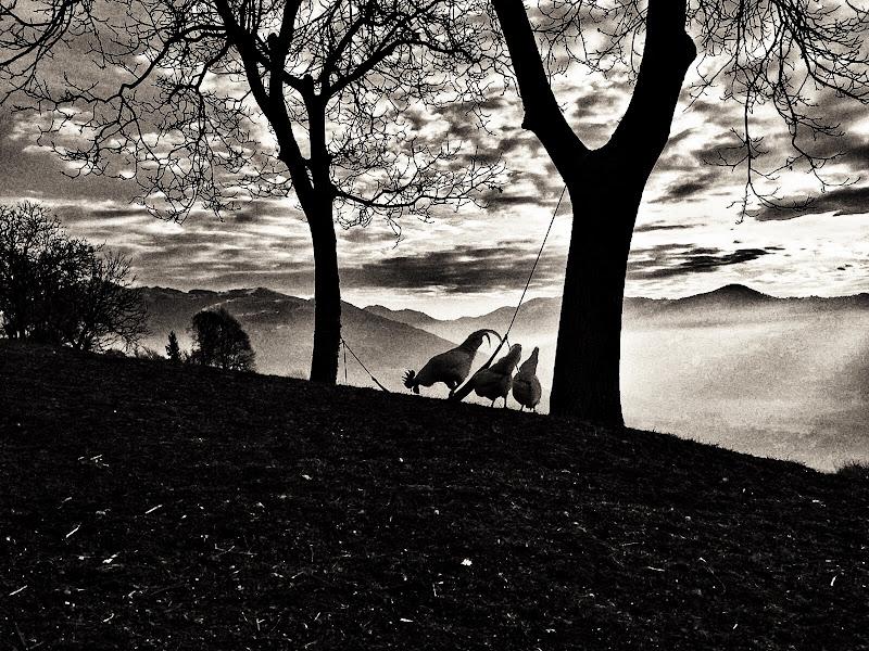 polli al tramonto di tizicarra