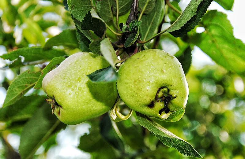 I frutti della Terra di saracoronella