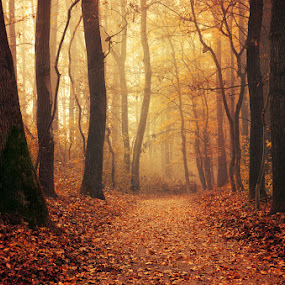 Autumn Walk LXXXVI. by Zsolt Zsigmond - Landscapes Forests ( path, foliage, forest, fall, leaves, woods, autumn, trees, mist, fog )