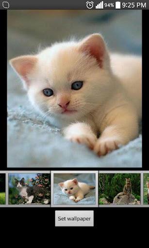 かわいい猫のライブ壁紙