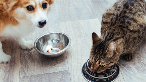 Can Dogs Eat Cat Food? Is Cat Food Safe For Dogs?