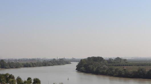 Doce casos ya de meningoencefalitis positivos a fiebre del Nilo en Sevilla
