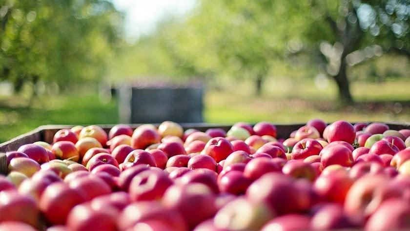 Las ayudas tienen por objeto mejorar el rendimiento y la sostenibilidad global de las explotaciones agrarias de Andalucía.