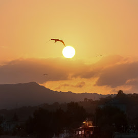 Seagull in the sunset by Salvatore Amelia - Uncategorized All Uncategorized ( seagull, red, seascape, sunset, house )