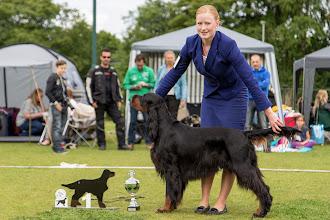 Photo: Kampioensklas reuen / Championclass dogs - Kilnrae Back in Time