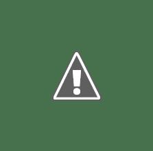 Photo: Saar,Gember,Sjaak,Canos,Tosca en Toby op een mistige ochtend.