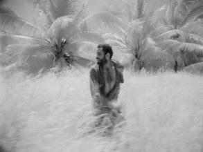 """Photo: Uma das cenas de """"Eu Sou Cuba"""" em que o filme infra-vermelho foi usado para criar um efeito distinto na cor da vegetação de uma selva cubana. As palmeiras e o mato ficam """"tingidos"""" de um branco pálido."""