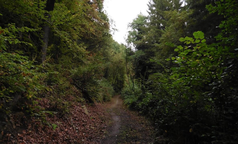 """door het bos langs de """"Cascatelles"""""""