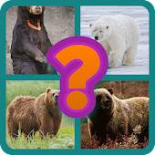 Guess the Bears