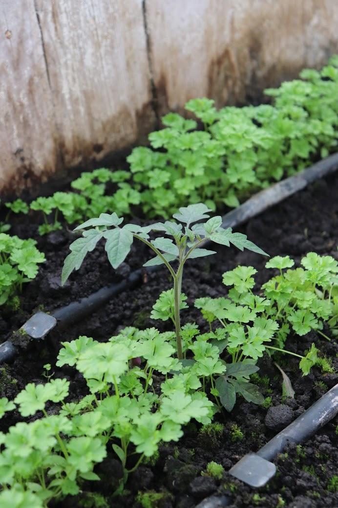 органические овощи киев