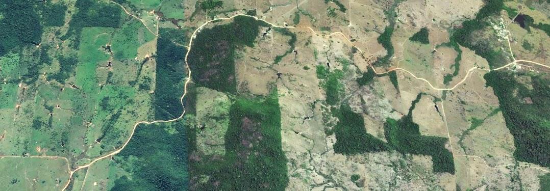 緑の風景の航空写真