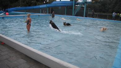 Photo: Springen in Zwembad De Zien