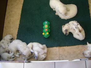 Photo: 13 april, robbie de rups is gearriveerd. leuke geluidjes voor de pups.
