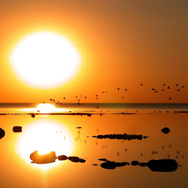 Peaceful by Bill Diller - Landscapes Sunsets & Sunrises ( in flight, flight, water birds, michigan, nature, tranquil, birds, water, peaceful, calm, sunset, flying, calmness, tranquility, wildlife )