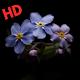 Download imagenes de flores For PC Windows and Mac