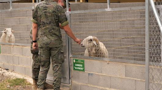 Un nuevo hogar para las cabras de la Legión