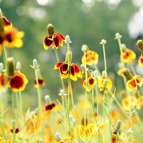 New Market by Sarah Minnihan - Nature Up Close Flowers - 2011-2013