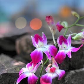 Orchid by Rakesh Das - Flowers Flower Arangements