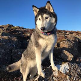 Ronja by Bjarklind Þór - Animals - Dogs Portraits