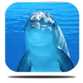 Marine Dolphin Live Wallpaper