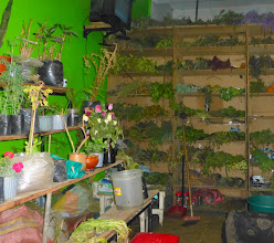 Photo: Shop of dried herbs for medicinal use