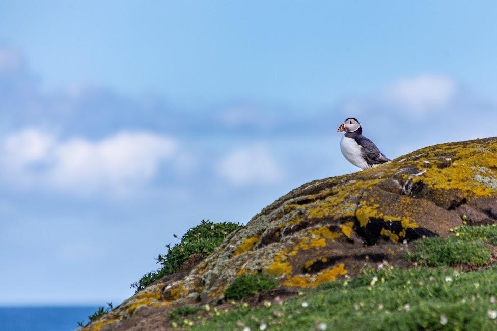 Isle of May, maskonur, Szkocja