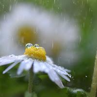 Pioggia primaverile di Sonia Delvecchio