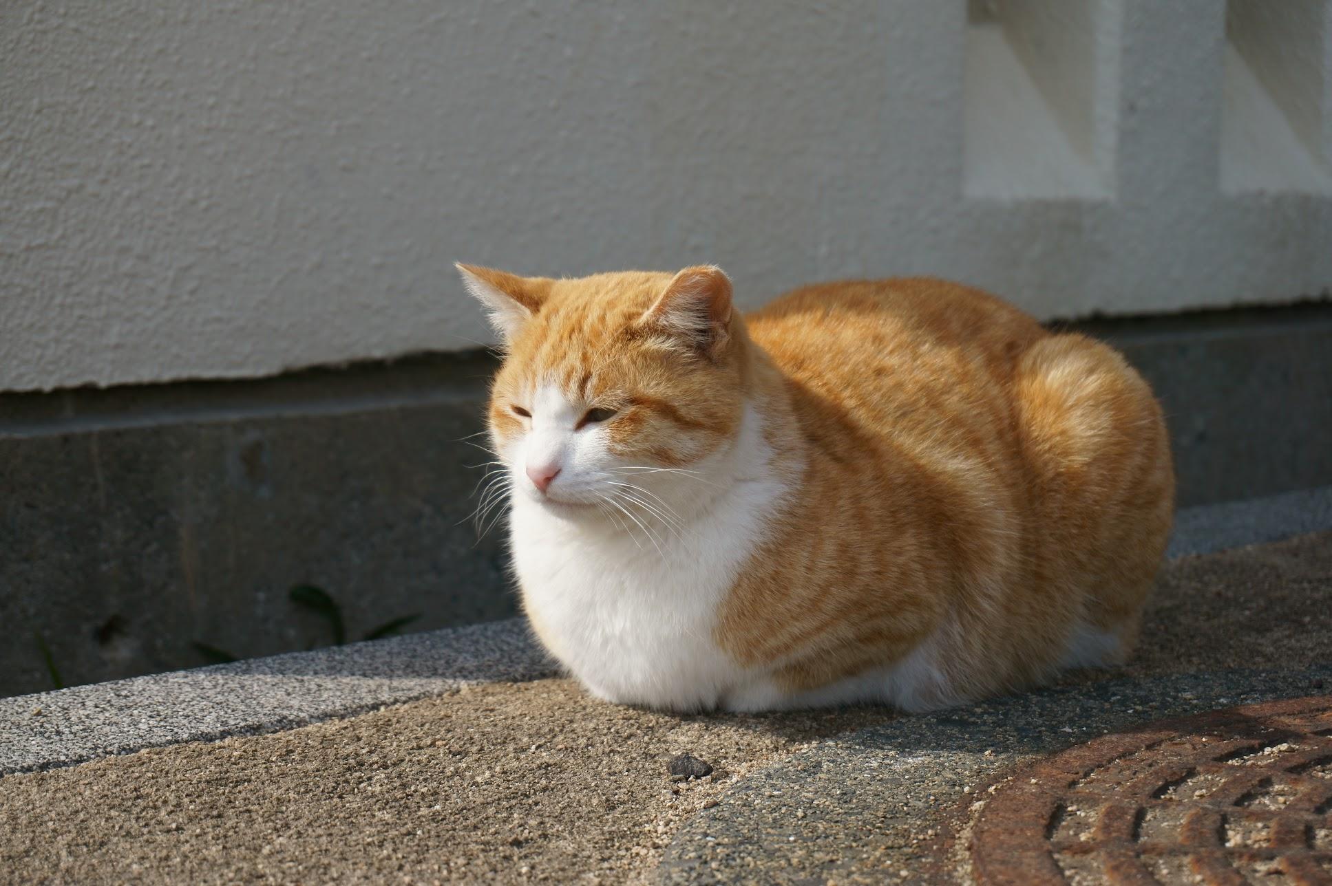 大塚海岸の茶トラ猫