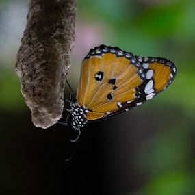 Butterfly by Abdulmagid alfrgany Photograph - Uncategorized All Uncategorized
