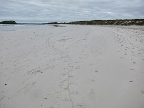 Photo: Iguana tracks (note line from dragged tail)