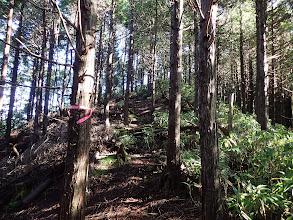間伐帯の脇を通る