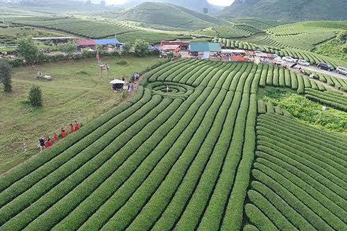 Du lịch Mộc Châu thử làm nông dân