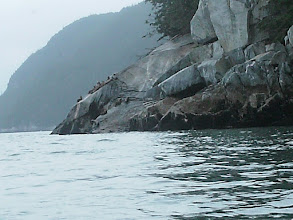 Photo: Sea Lions on the rocky shoreline of Chilkoot Inlet.