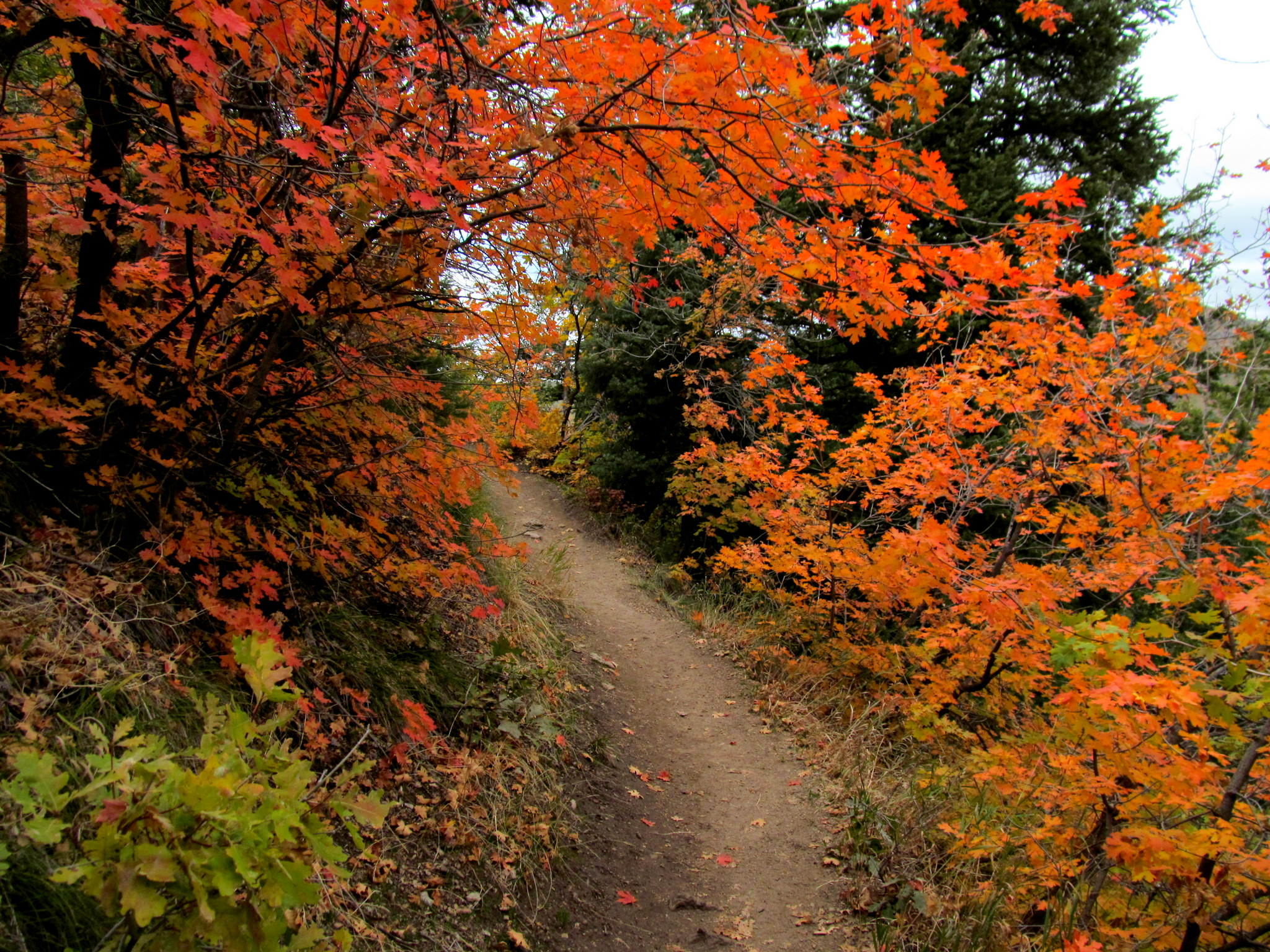 Photo: Desolation Trail