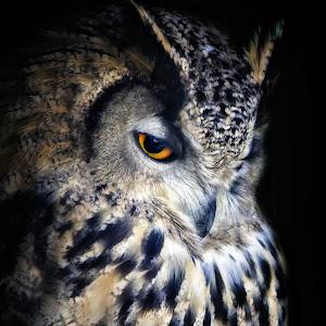 owl 10.jpg