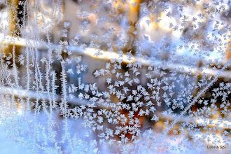 Photo: Zauberhafte Eisblumen 2