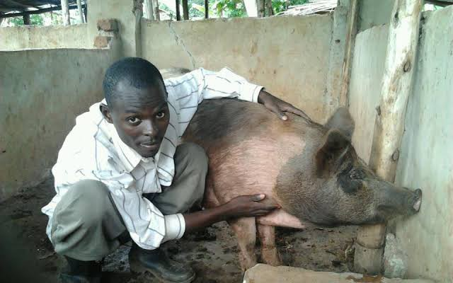 A man and a pig