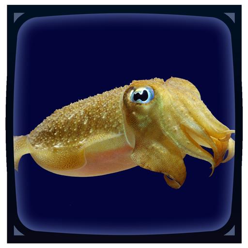 Cuttlefish Live Wallpaper
