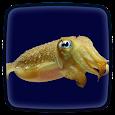 Cuttlefish Live Wallpaper icon