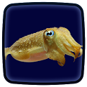 Cuttlefish Live Wallpaper icon