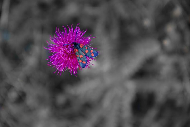 Farfalla su Fiore di Benjaminb