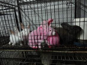 Photo: Že prej se takovýhle králíci líp prodávaj.